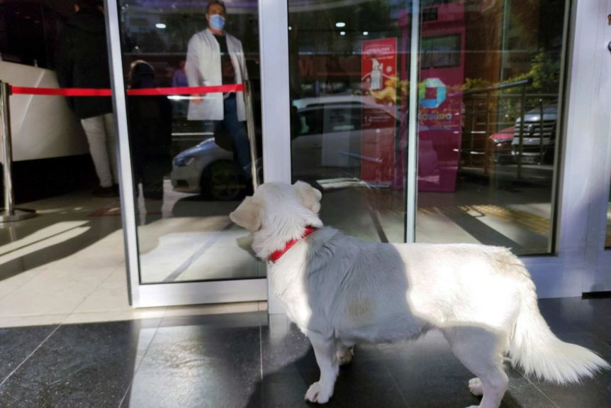 [WATCH] Loyal Dog Boncuk Waits For Sick Owner at Hospital for 6 Days